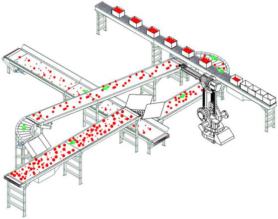 robotic case packing of tomatoes