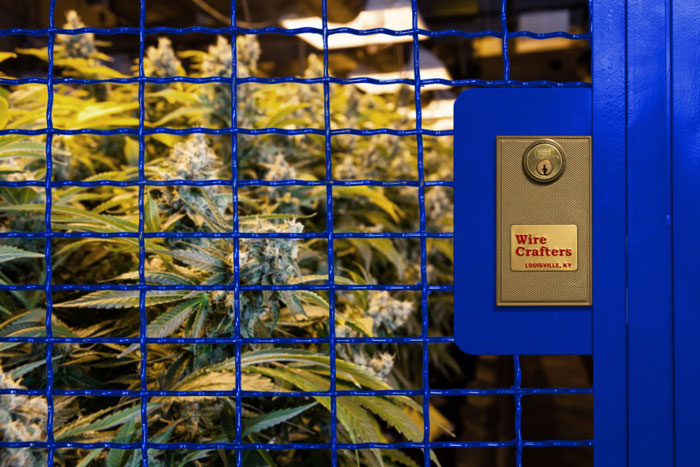 security cage for medical marijuana facility